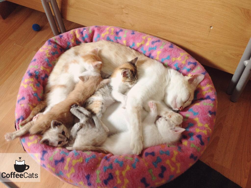 Macchi con sus hermanos y su madre